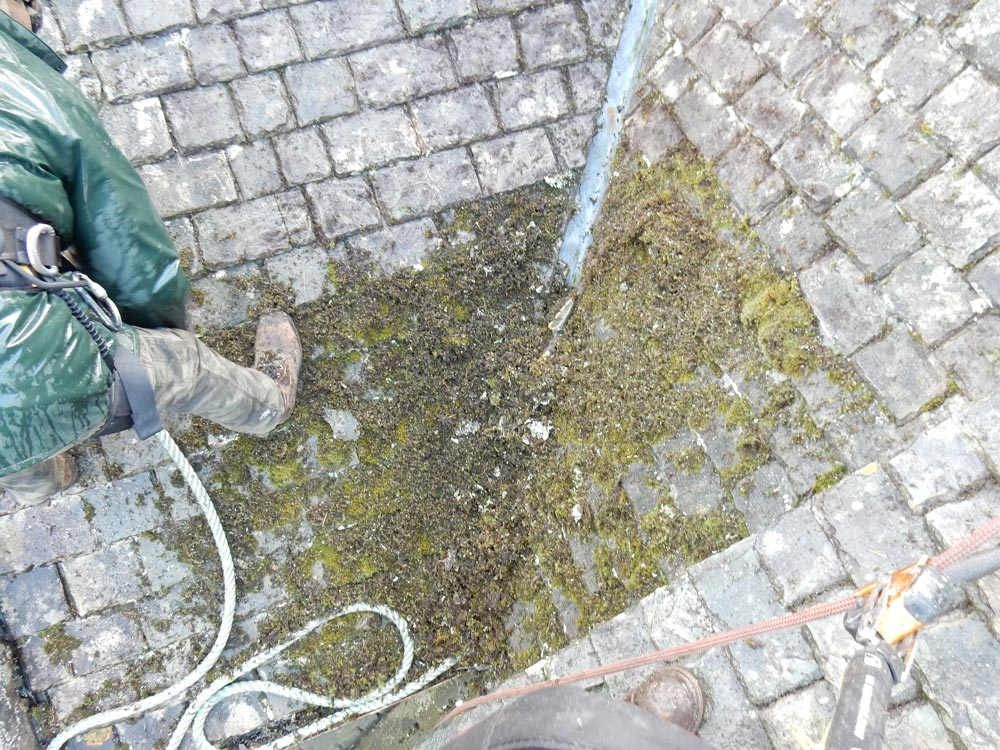 moss_removal_01