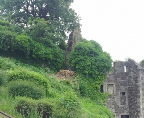 vegetation_2